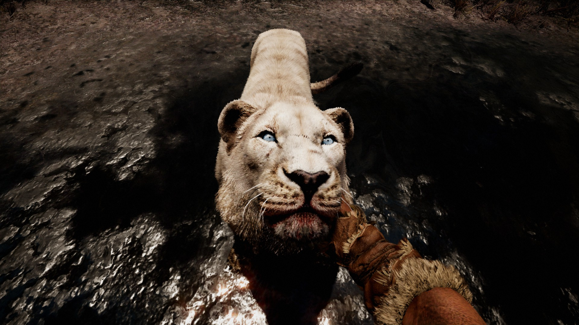 how to call tamed animals in far cry primal